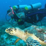 Scuba at Playa del Carmen has great sea life and coral.